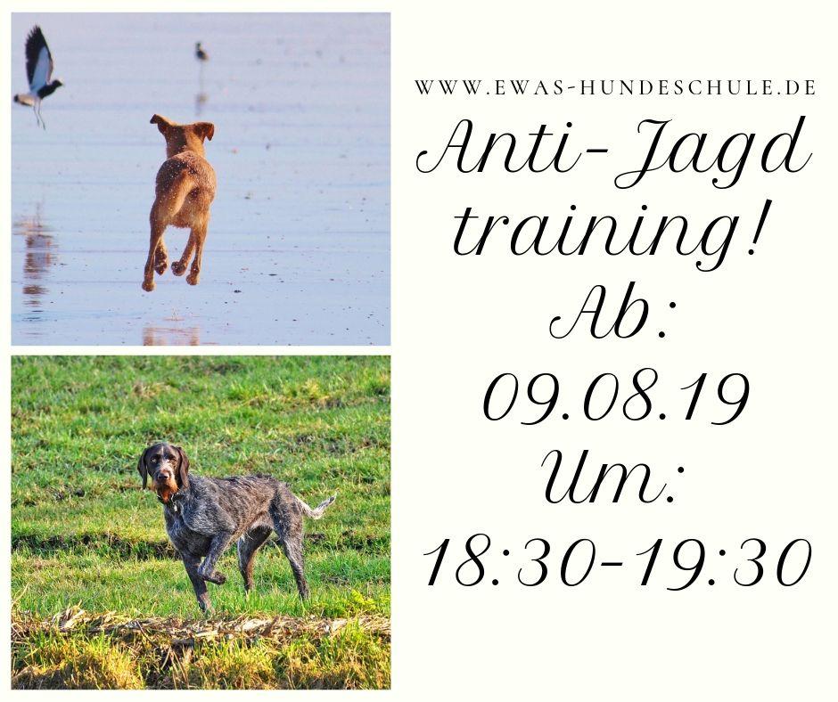 tolle Passform auf großhandel Schuhwerk Anti-Jagd training! Ab_ 09.08.19 Um_ 18_30-19_30 - Ewas ...