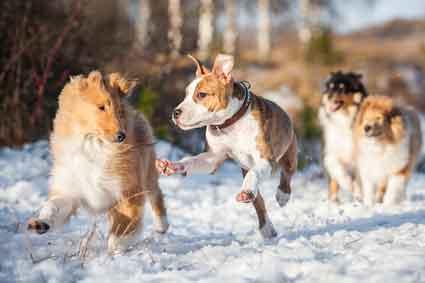 Junghunde Training